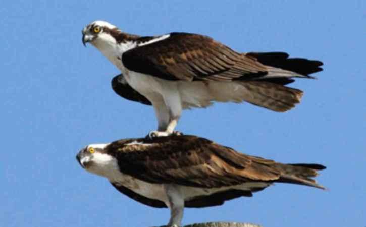 oiseaux-un-sur-lautre-domination-ferule