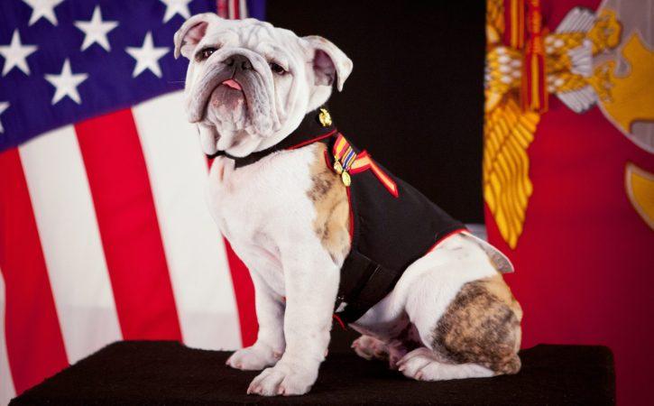 chien-fier-uniforme-joyeux-drille