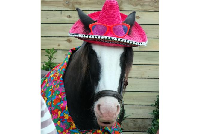 cheval-habillé-chapeau-rose-muscadin