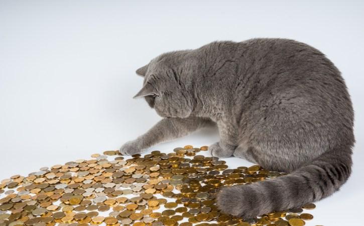 chat-argent-avare-fesse-mathieu