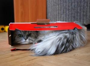 chat-dans-un-carton-idoine