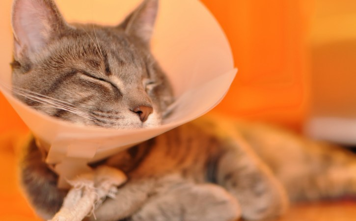 chat-malade-cone-grabataire