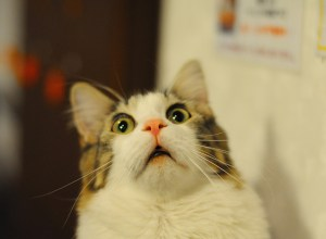 chat-peur-pleutre