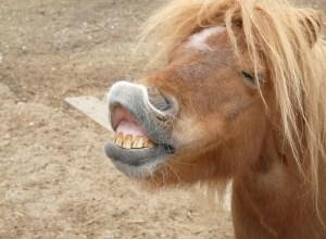 cheval-grimace-agreste