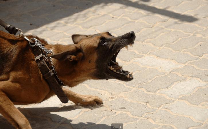 chien-aboie-laisse-moloch