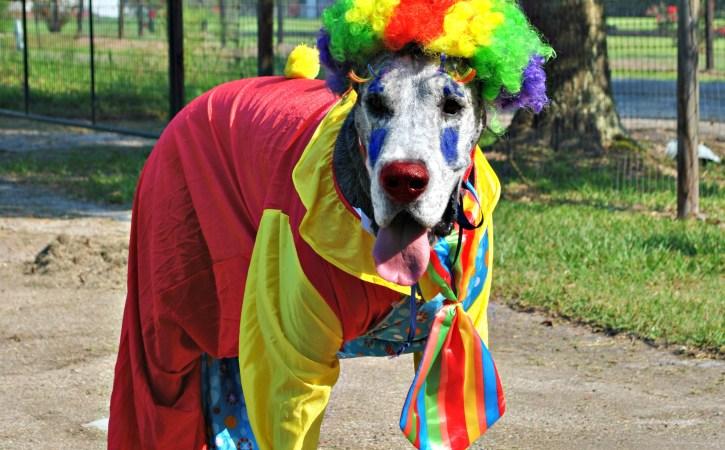 chien-deguise-en-clown-recreer