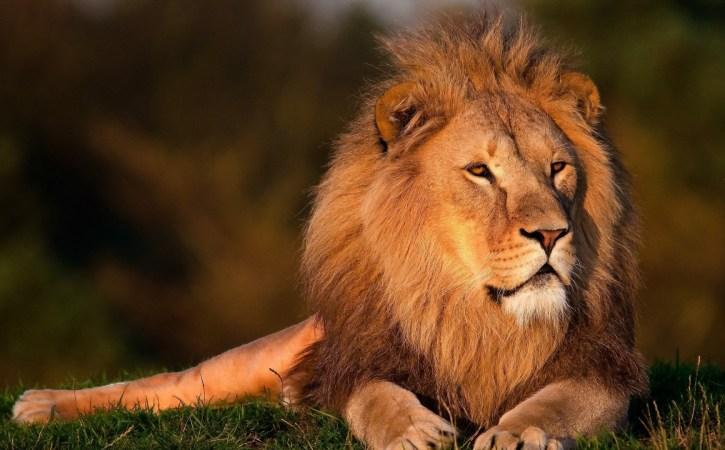 lion-noble-hieratique