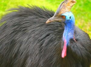 oiseau-colore-exentrique-cocodes