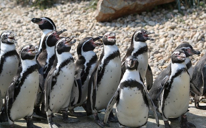 pinguins-papotes-discutent-verbiage