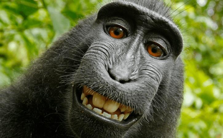 singe-sourire-fatuite