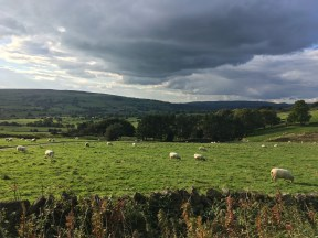 Sheep ft. rain cloud that I'm thankful didn't reach us
