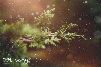 A karácsony hagyománya