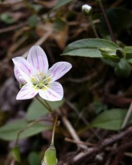 Spring Wild flower
