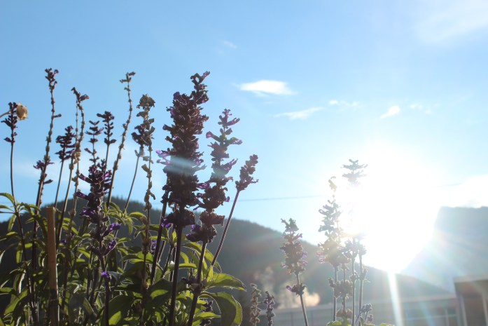 A bright, beautiful morning!
