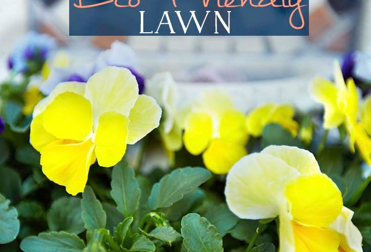 Check Out These Easy Tips for a More Eco-Friendly Lawn