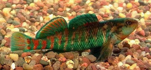 Fish Fish Fish Menu