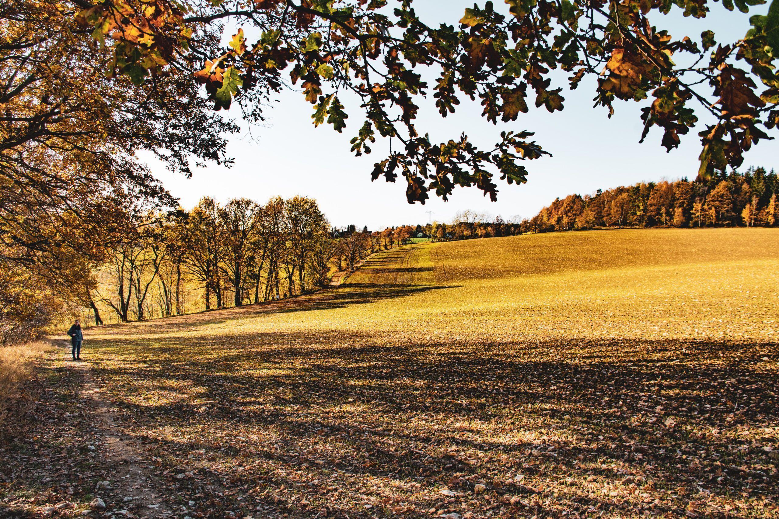 Ein Blick über die Felder Kleinolbersdorfs