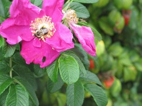 Sometimes, even small things intrigue me. For example, a bee in this flower along the road caught my attention.