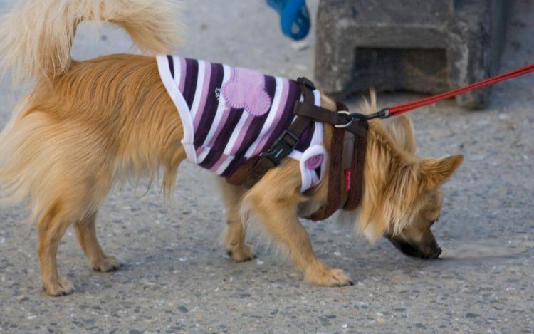 Dog Sniffing