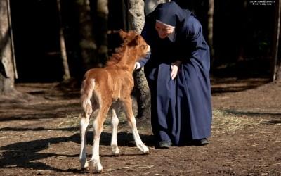 Religieuse et Cheval nouveau née