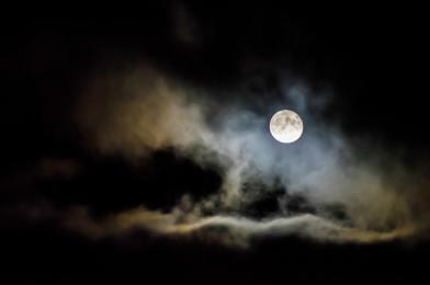 Poema de la musa insomne