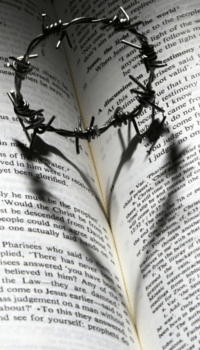 bookcrown