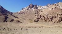 Lots of mountains and livestock throughout the Gorno-Badakshan Region