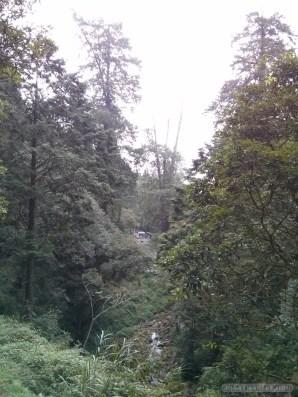 Alishan - scenery 2