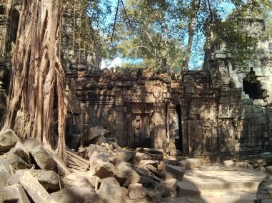 Angkor Archaeological Park - Ta Prohm 10
