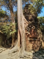 Angkor Archaeological Park - Ta Prohm 15