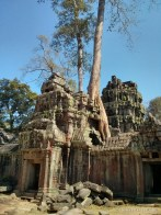 Angkor Archaeological Park - Ta Prohm 18