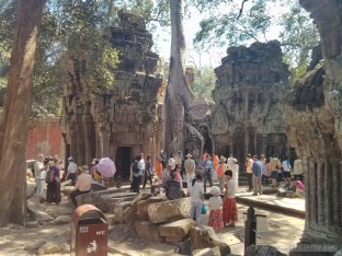 Angkor Archaeological Park - Ta Prohm 19