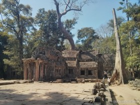 Angkor Archaeological Park - Ta Prohm 23