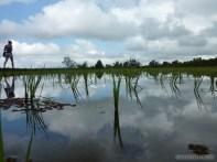 Balinese rice terraces - scenery 16