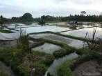 Balinese rice terraces - scenery 3