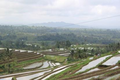 Balinese rice terraces - scenery 6