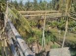 Bohol - Coco farm hostel bamboo skywalk 5