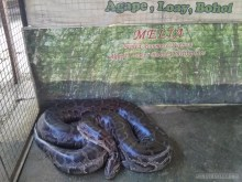 Bohol tour - mini zoo Melia