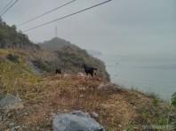 Cat Ba - bike tour view goats