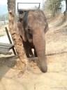 Chiang Mai trekking - elephant camp 1