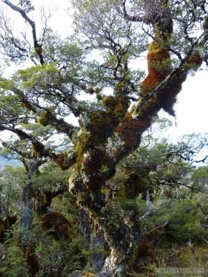 Fiordlands - scenery 7