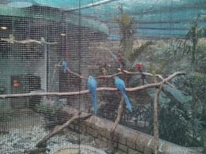 Hong Kong - Kowloon park birds
