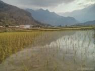 Mai Chau - rice fields 11