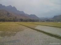 Mai Chau - rice fields 13