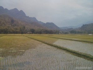 Mai Chau - rice fields 13