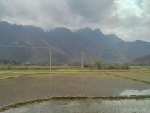 Mai Chau - rice fields 2
