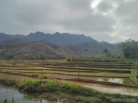 Mai Chau - rice fields 9