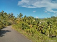 Moalboal - biking view 6