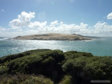 NZ North Island - island sand dune
