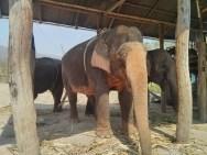 Pai - elephants 1